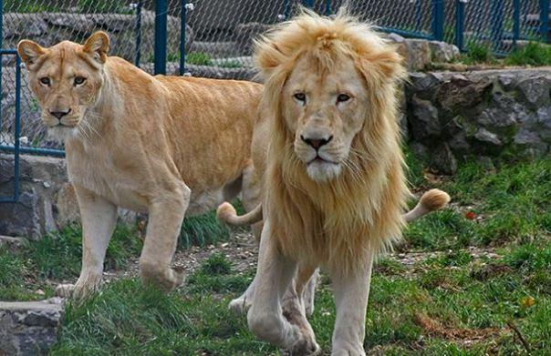 zoo vrt u trebinju